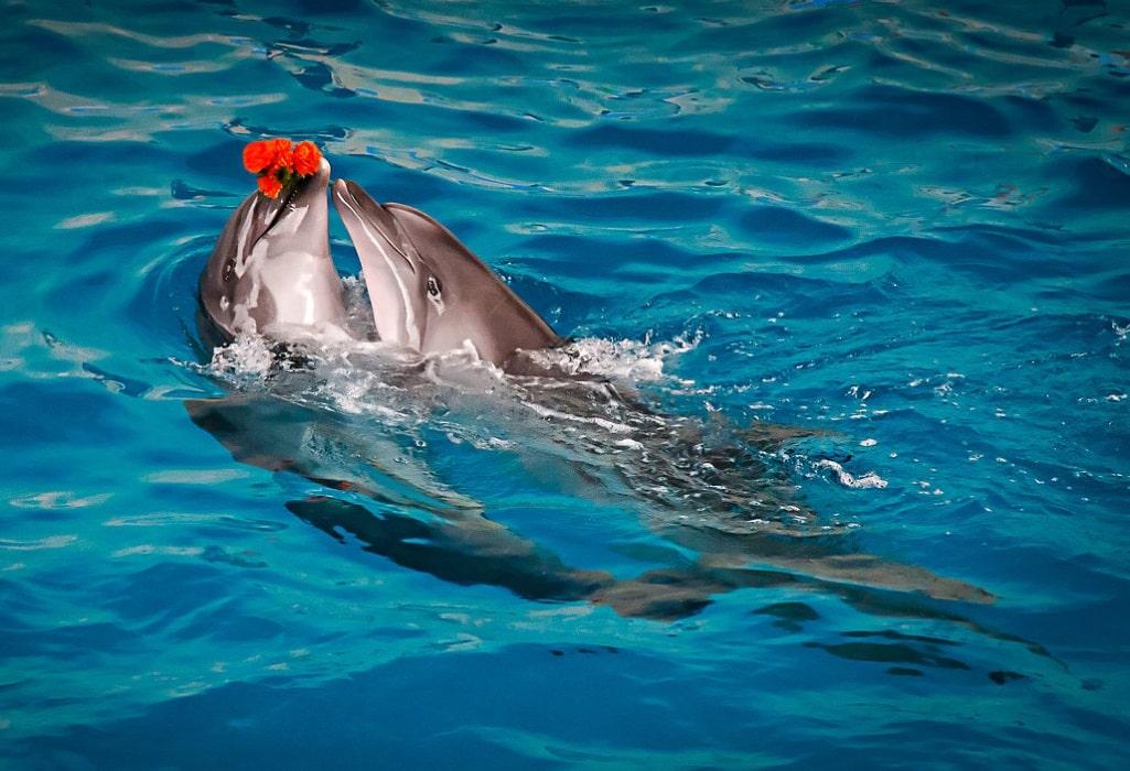 огромном дельфинарий лазаревское фото загадочная, притягательная