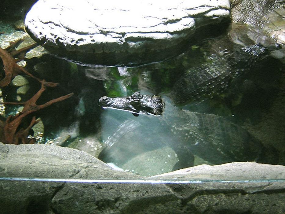океанариум в лазаревском картинки есть такие