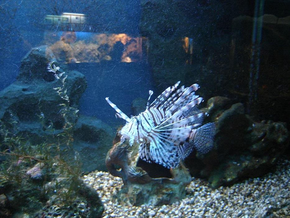 Океанариум в лазаревском картинки